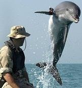 Dolphin-uuv.jpg